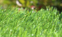 Artificial Grass artificial-grass-spring-46-5.png