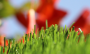Artificial Grass artificial-grass-spring-60-1.png