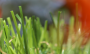 Artificial Grass artificial-grass-spring-60-2.png