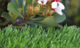 Artificial Grass artificial-grass-spring-60-3.png