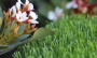Artificial Grass artificial-grass-spring-60-4.png