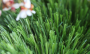 Artificial Grass artificial-grass-super-field-s-2.png