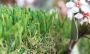 Artificial Grass artificial-grass-u-blade-80-3.png