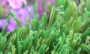 Artificial Grass artificial-grass-w-blade-80-1.png