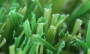 Artificial Grass artificial-grass-w-blade-80-2.png