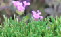 Artificial Grass artificial-grass-w-blade-80-3.png