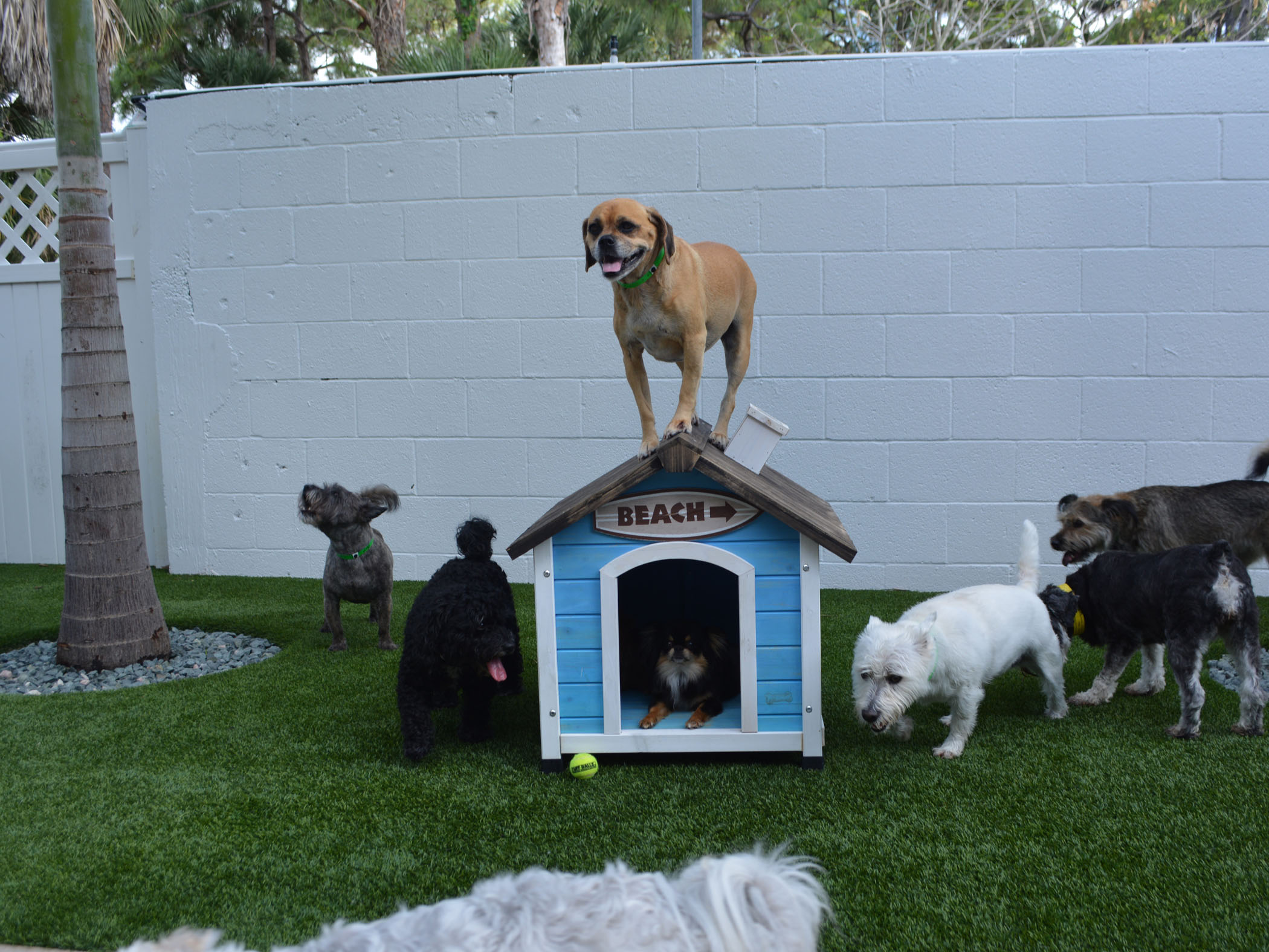 Hotel For Dogs with Artificial Grass for Dogs, Altadena, California