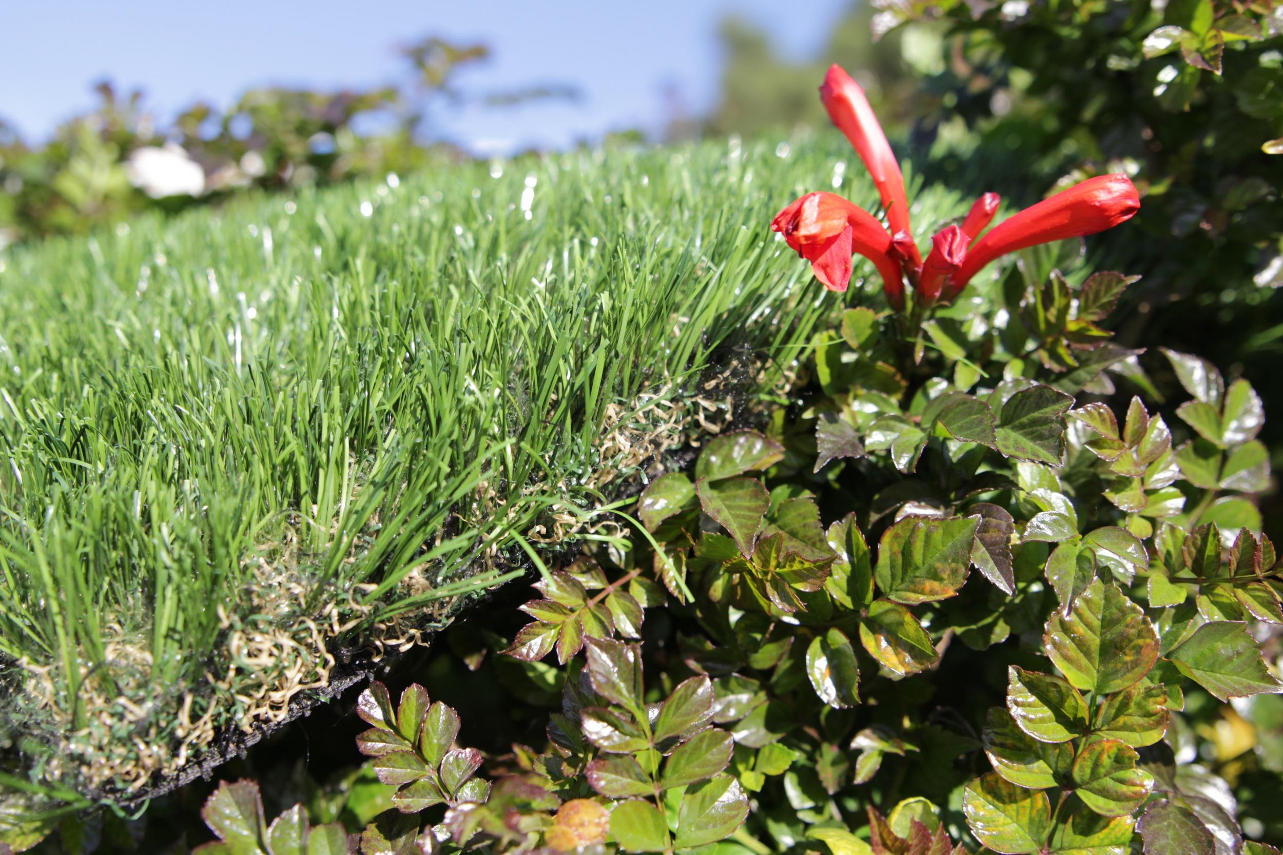Cashmere Best Artificial Grass