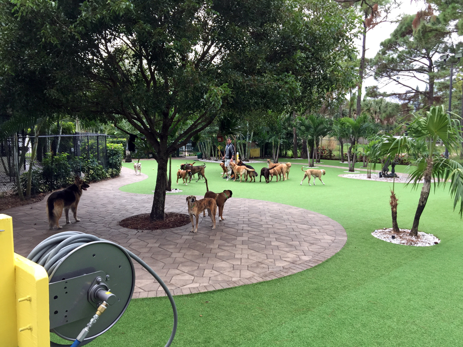 Cost of fake grass wellington florida palm beach county for Garden designs for dogs