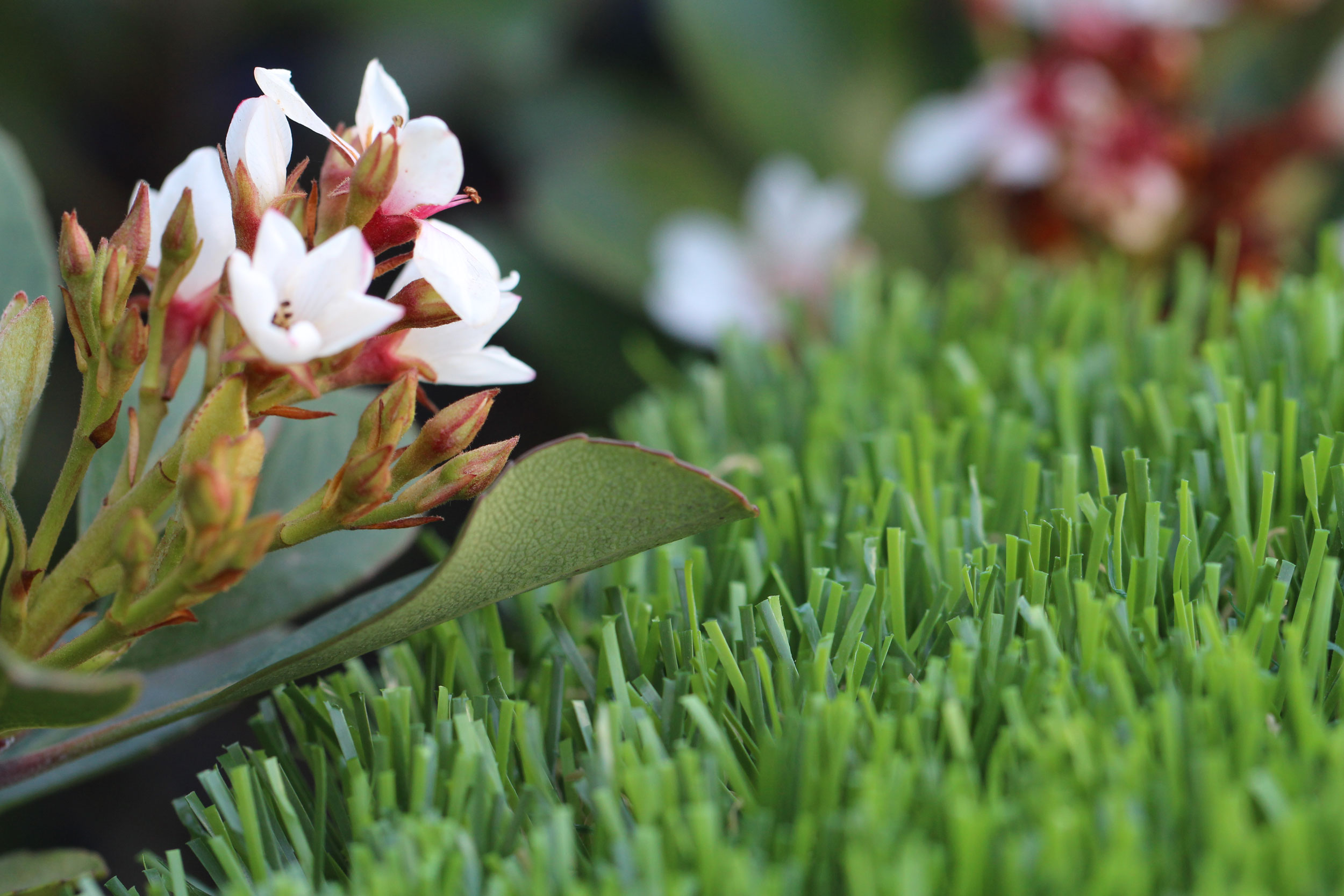 Spring-60 Artificial Grass For Rooftops