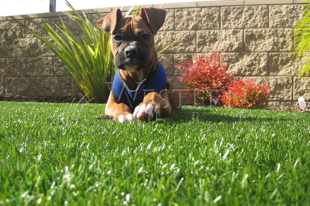What Do You Need to Know About Artificial Grass Warranties?