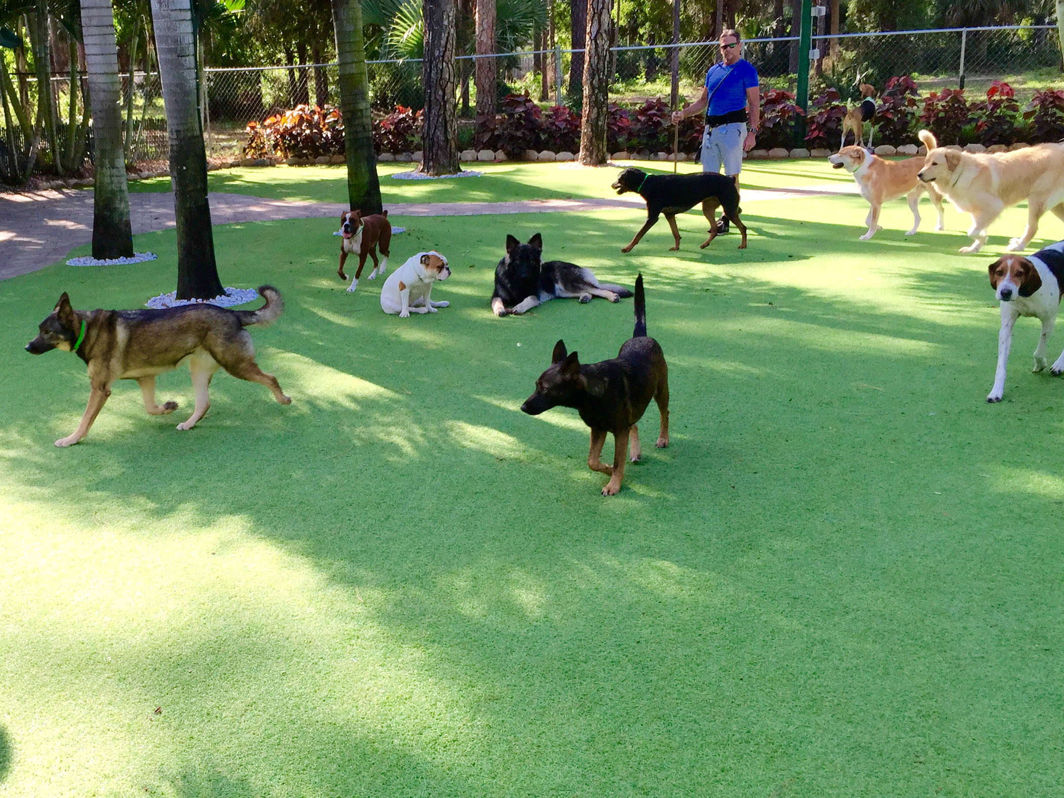 Dog grass huntington park california los angeles county for Dog hotels los angeles