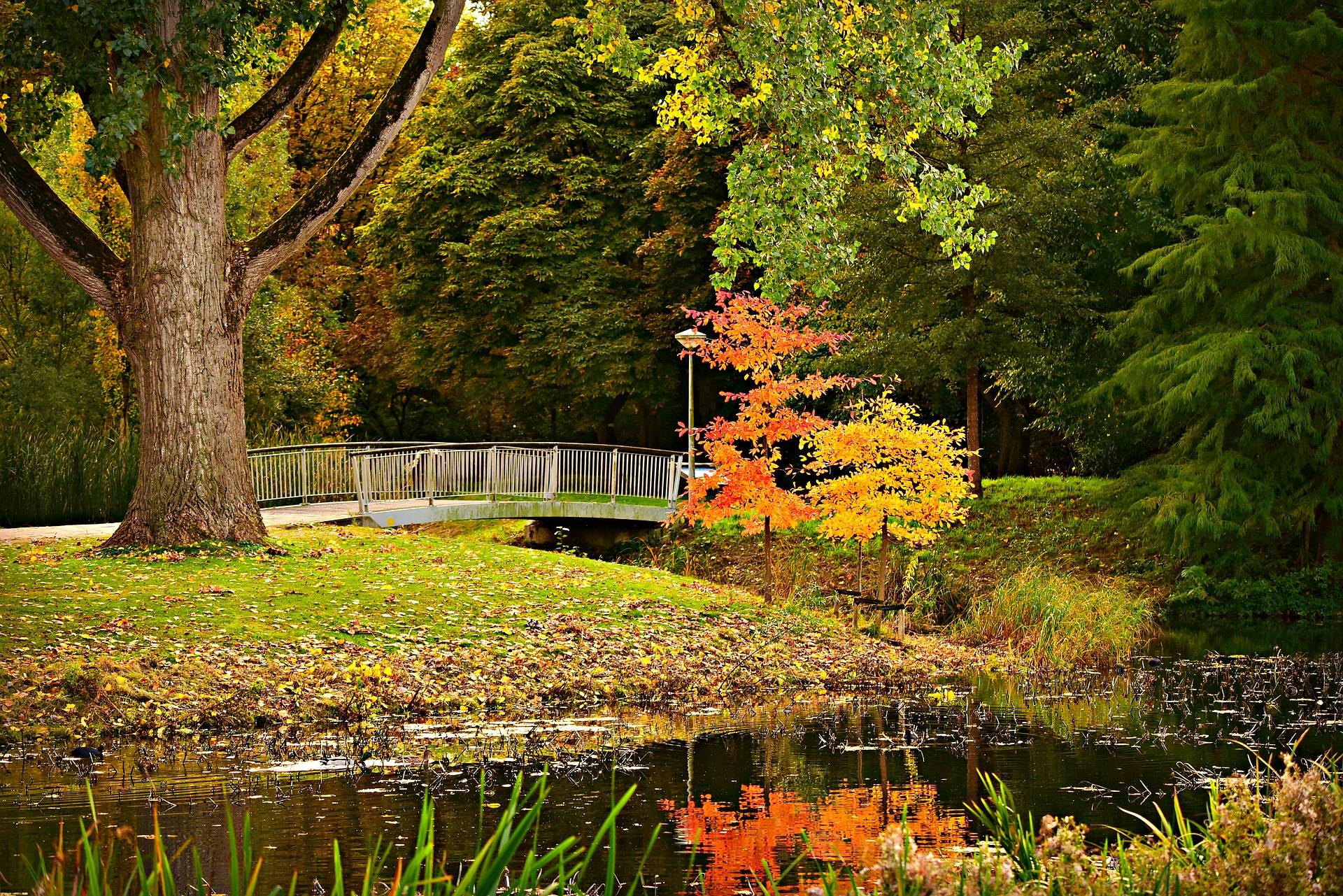 Park with a pond and large tree in the fall, yellow, red leaves