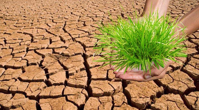 California drought green grass dry soil landscape alternative landscape cracks land