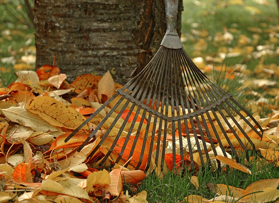 Fall yard clean-up, raking leaves with a garden rake
