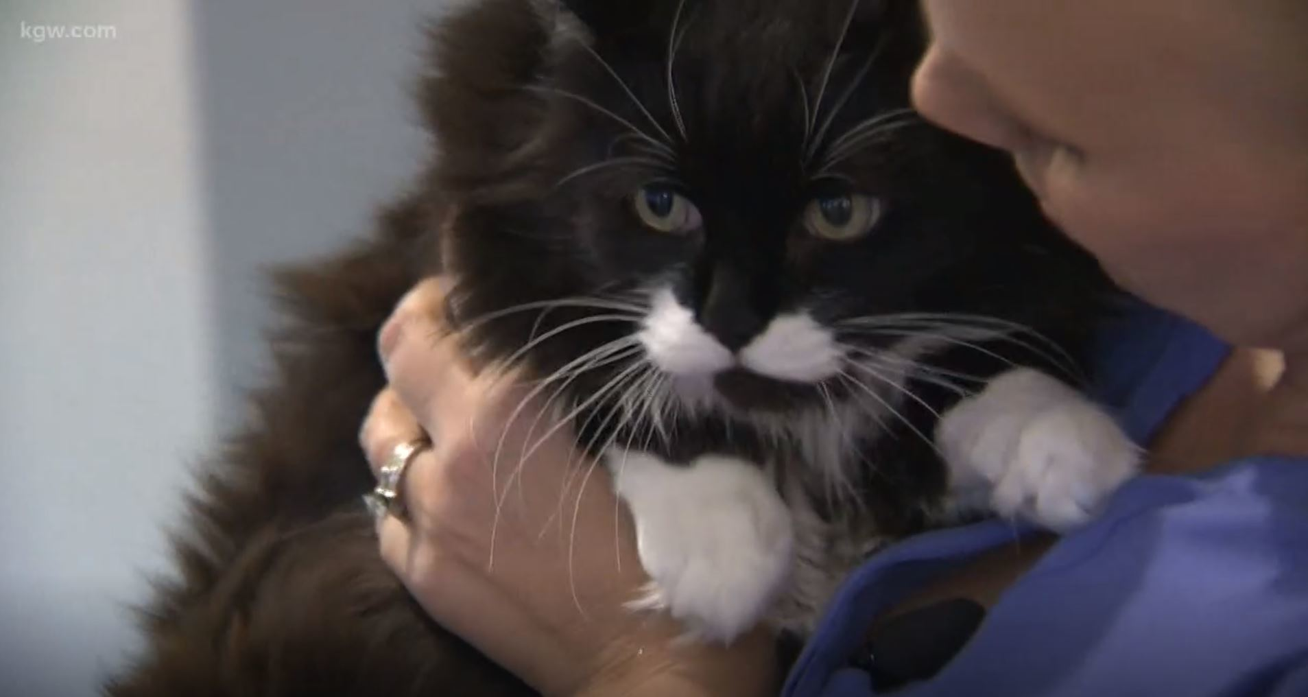 Rescue cat detected Oregon womans breast cancer, owner says