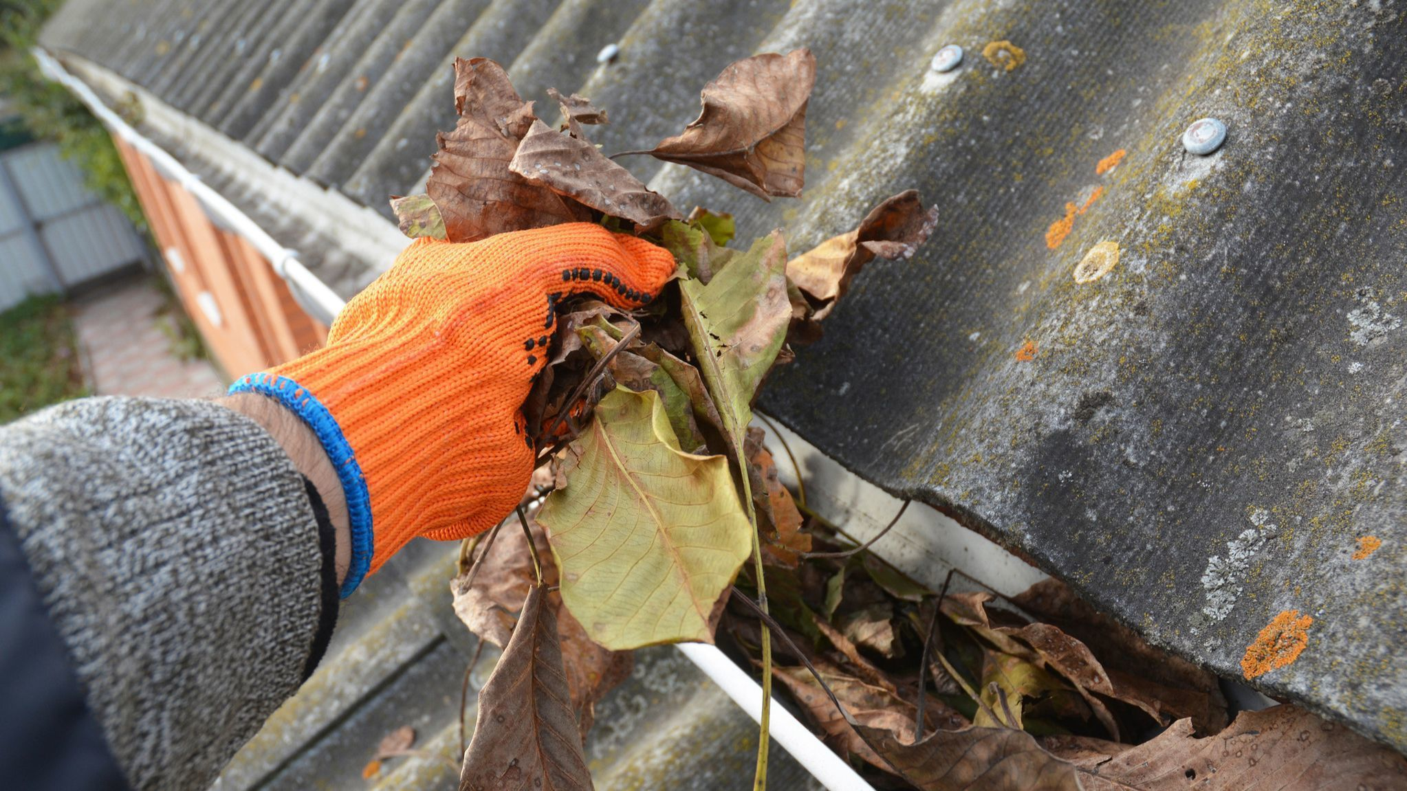Your December garden chore list: Water wisely, plant liberally and beware of frosts