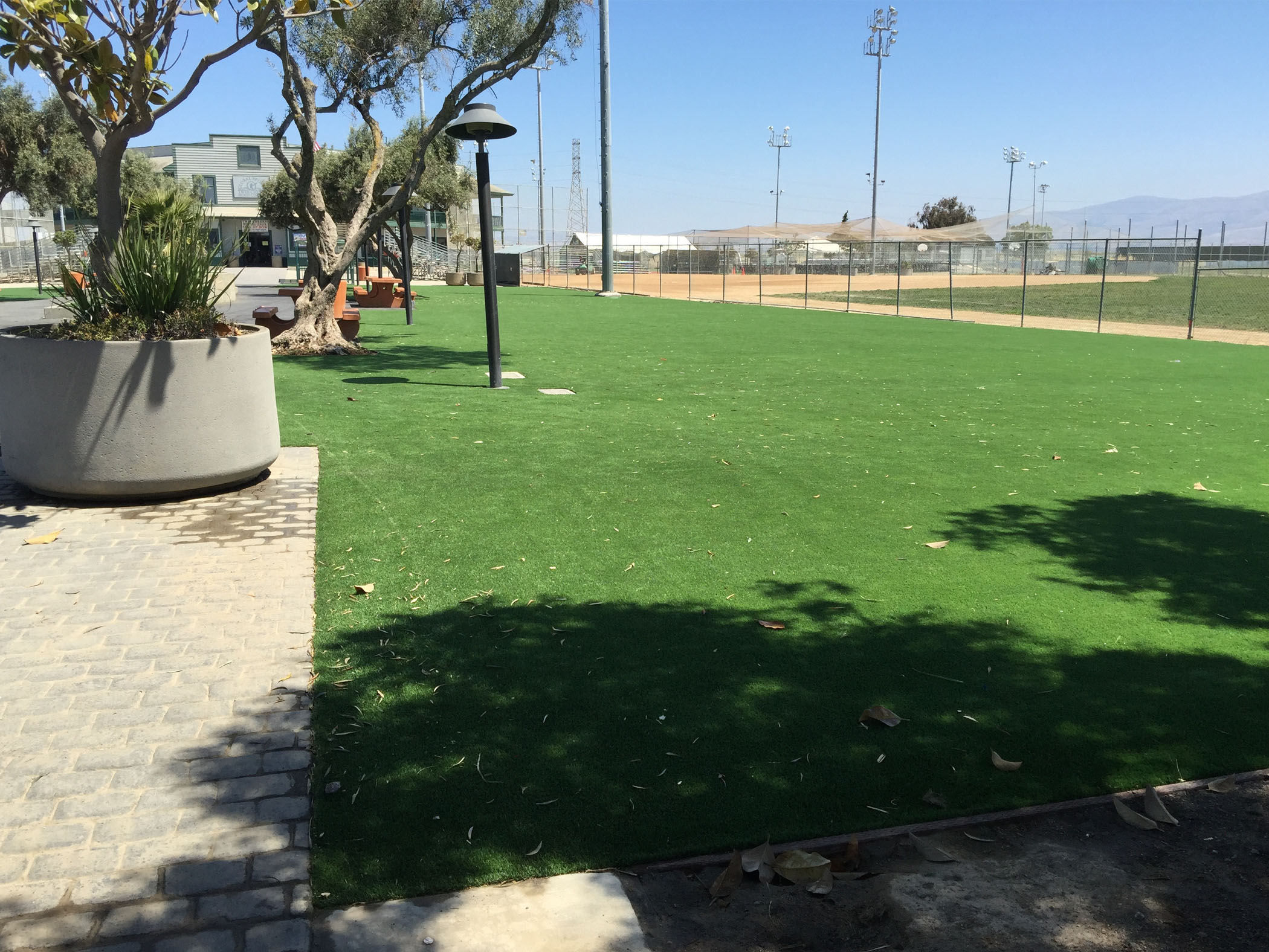 Landscape Ideas with Artificial Grass South Whittier, California