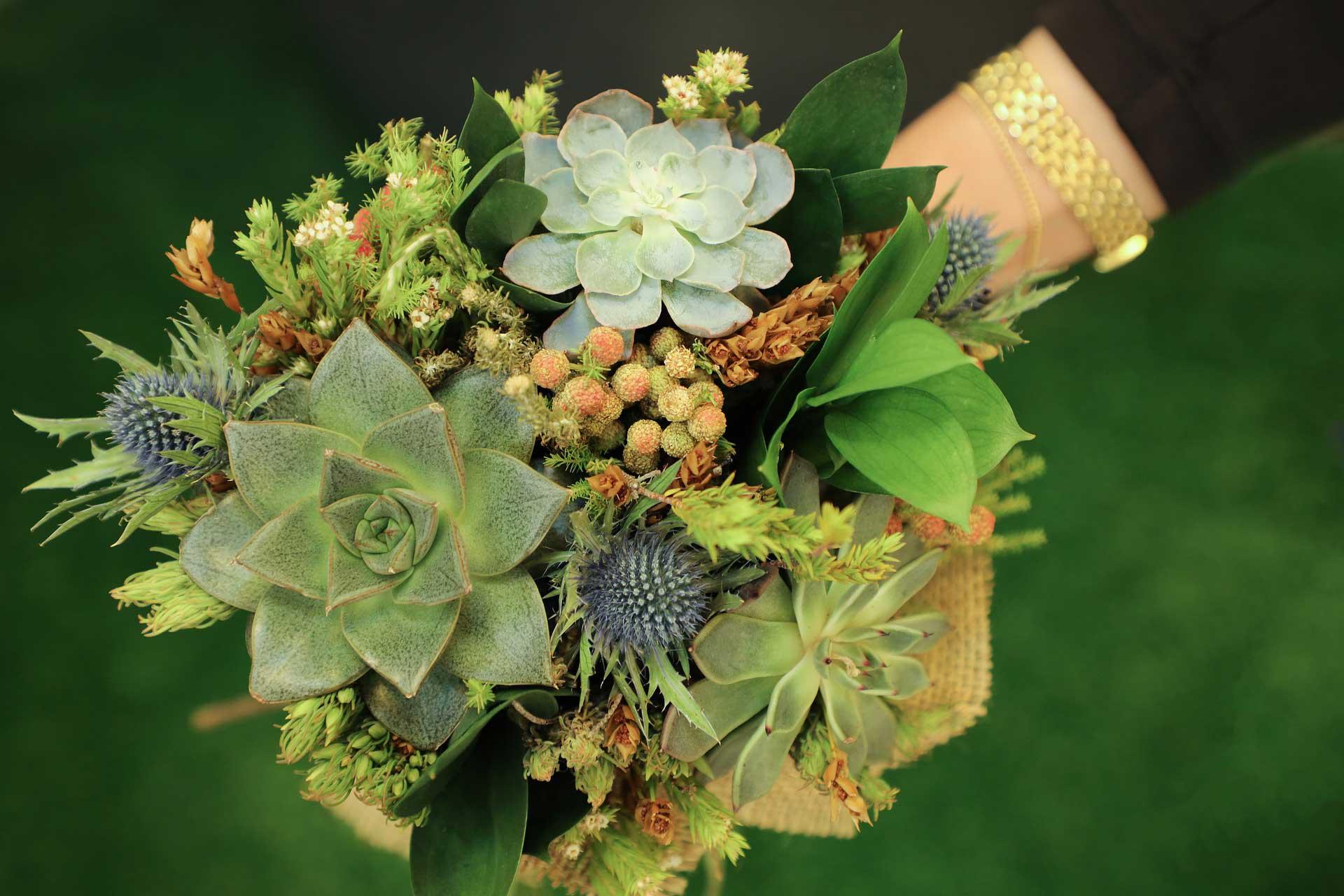 Succulent Garden - Anti-Anxiety Geometric Patterns