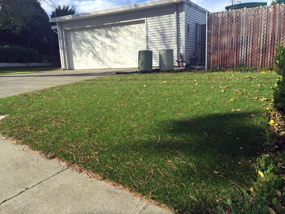 Synthetic Grass Installation In San Jose, California