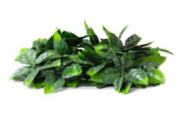 Artificial Ivy