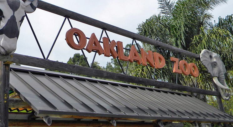 Oakland Zoo Visitor Climbs Over Barrier for Tigers Pen