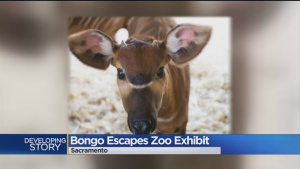 Taylor Swift Safe After Escaping From Sacramento Zoo