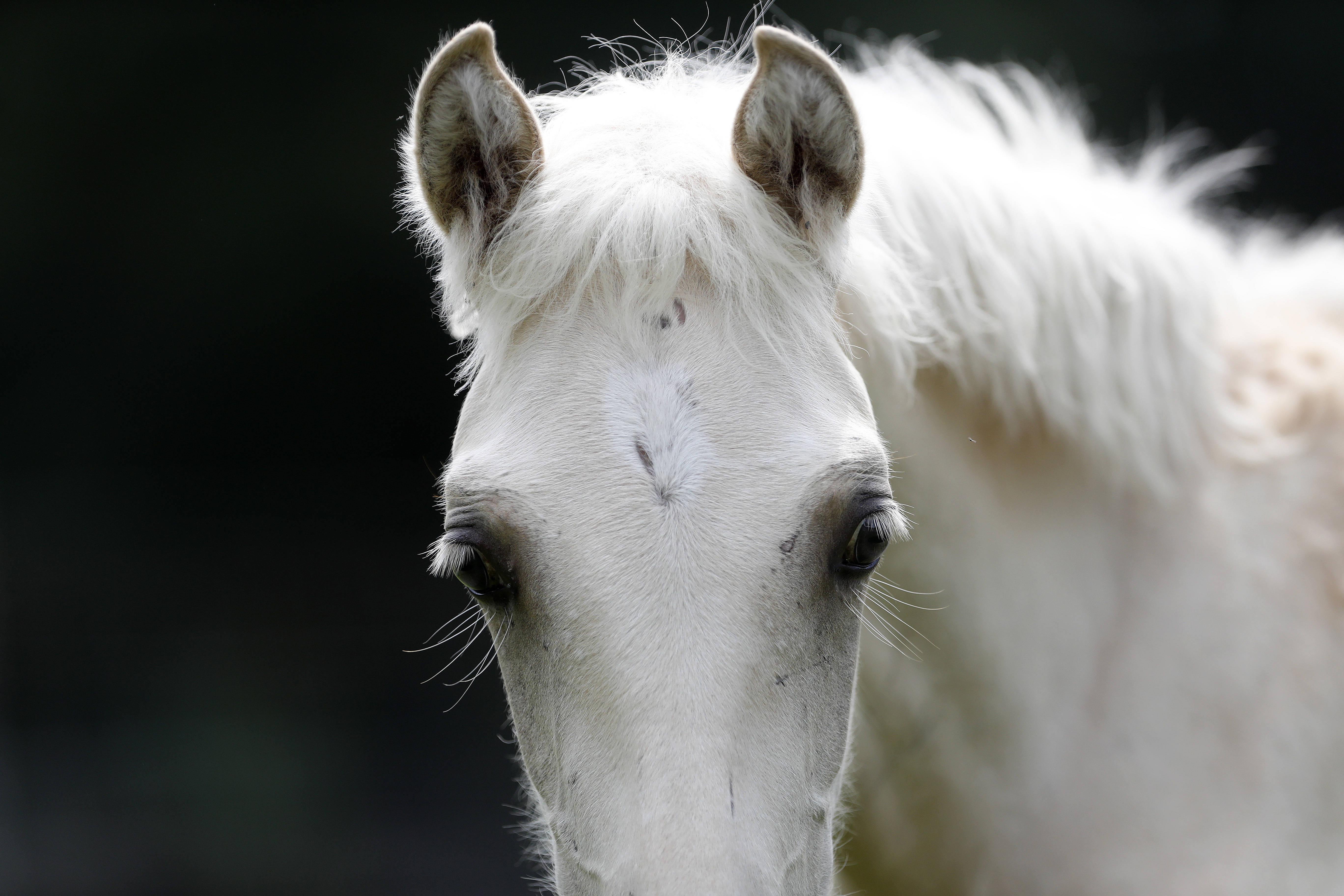 Oklahomas Choctaw horses connect to Mississippi