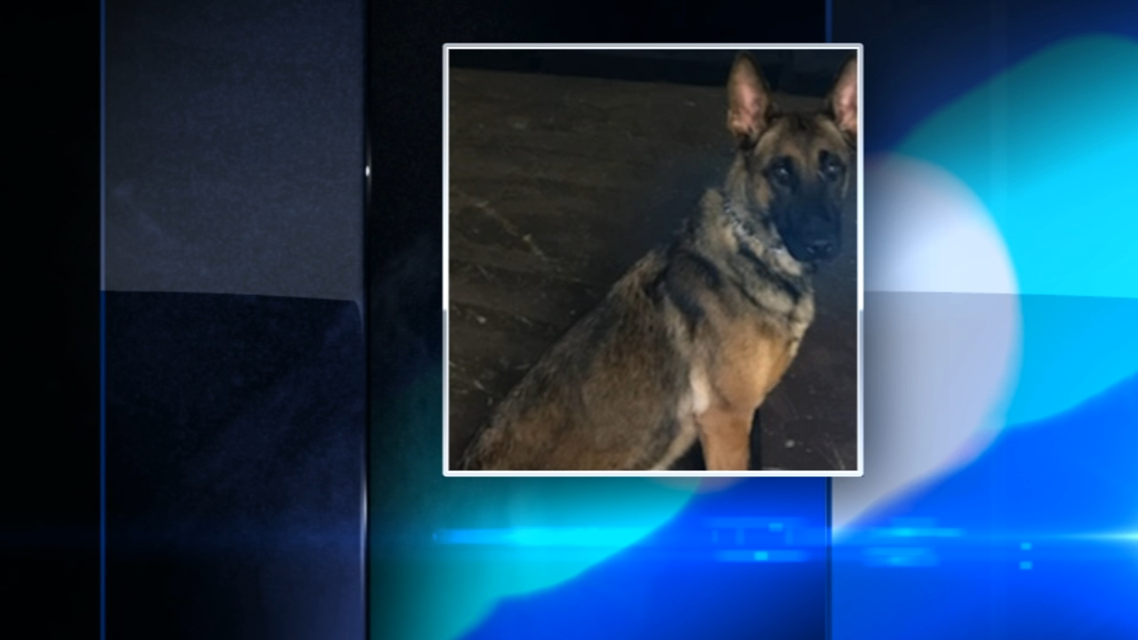 Police K9 relieved of duty after killing Yorkie named Bandit at Bacon Fest